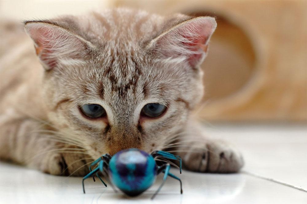 گربه ها حشرات را می کشند.