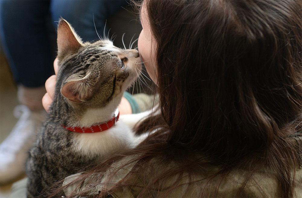 گربه شما عاشقانه دوستتان خواهد داشت.