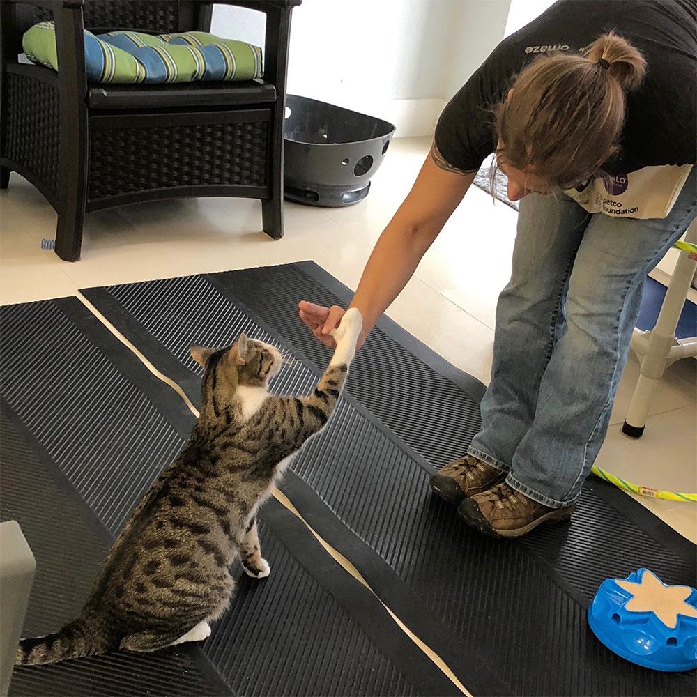 آموزش دادن به گربه