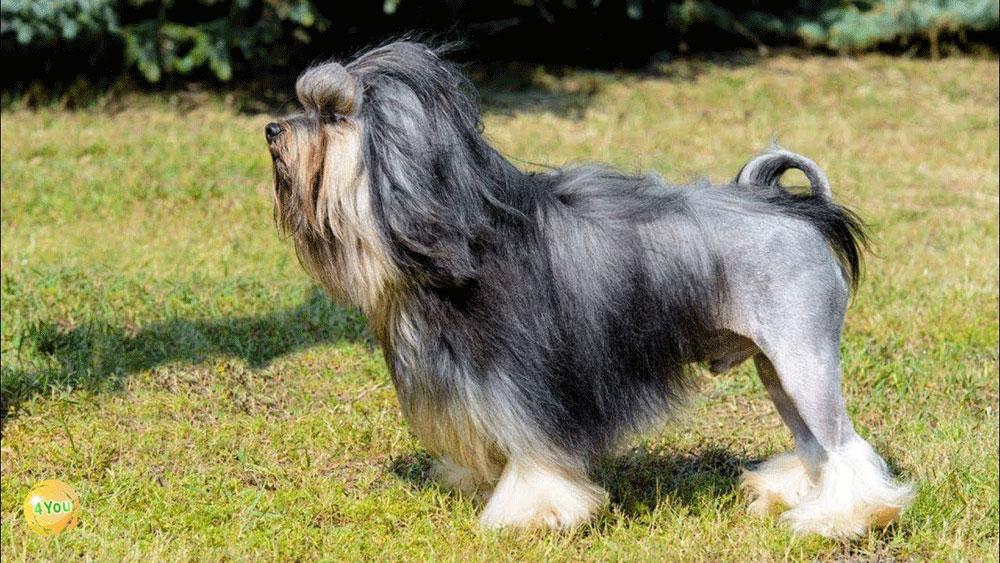 سگ لوچن