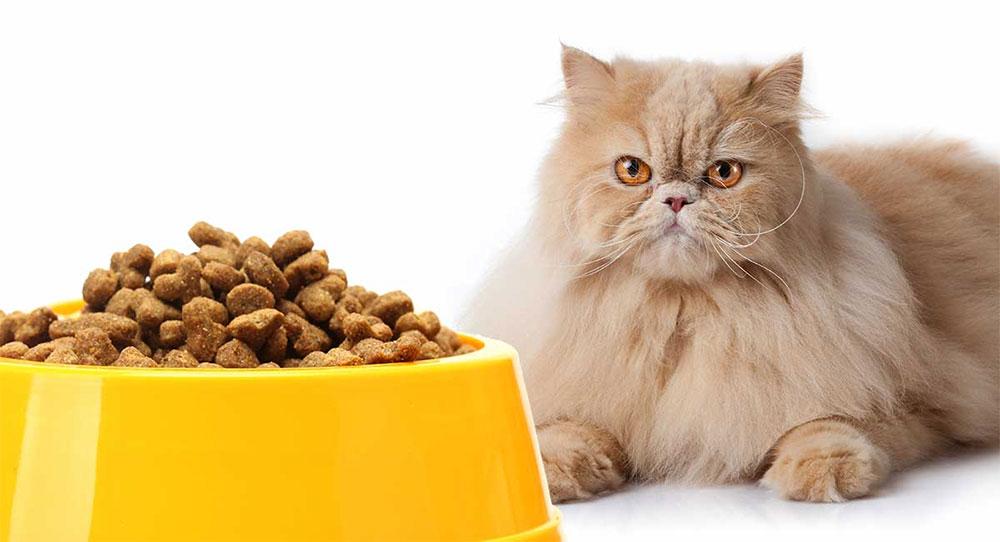 غذای خشک گربه