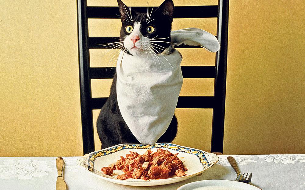 استفاده از غذای خانگی برای گربه