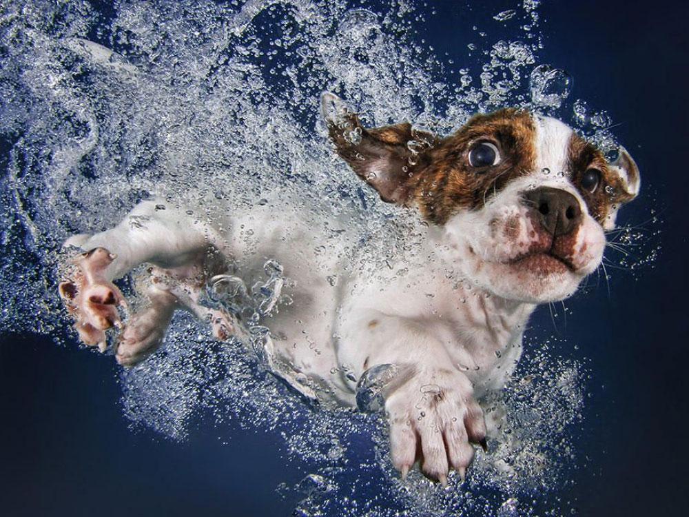 غرق شدن سگ