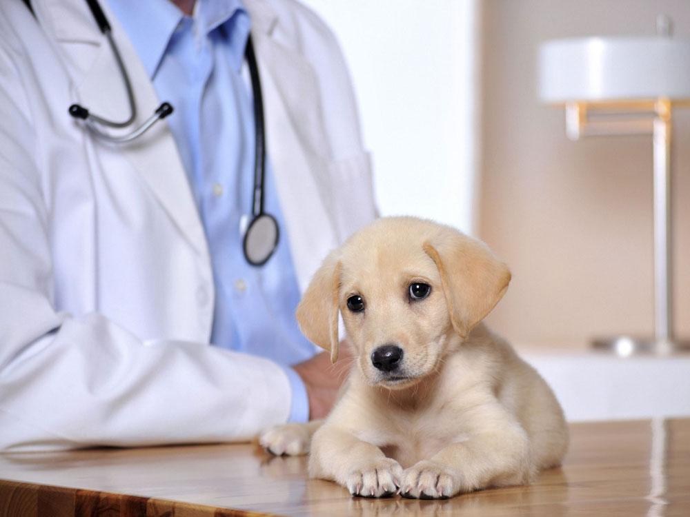 بیماری هاری سگ